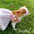 เสื้อผ้าแฮนเมดหมาน้อยจากแบรนด์ FollowHound คะ :)