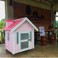 บ้านหมา บ้านแมว Happy Dog Home | 095-4577373