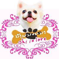 ร้าน บ้านมะหมา Chi-in love | 0914049914