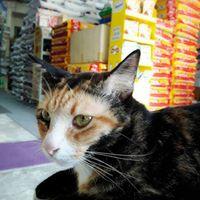 ร้านเถ้าแก่แก๊ป อาหารสัตว์ สินค้าเกษตร 082-4763374