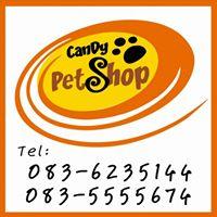 Candy Pet Shop ขายหนูแฮมเตอร์ ชูก้า สัตว์ฟันแทะและอุปกรณ์ - พิษณุโลก