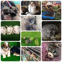 ร้านขายสัตว์เลี้ยง และ อุปกรณ์ The PETs หาดใหญ่ | 086 695 5040