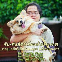 Pet Taxi By Thoon : บริการรับ - ส่ง สัตว์เลี้ยงแบบวีไอพี 081-5674677