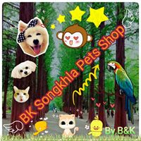BK Songkhla Pets Shop.ซื้อ-ขาย และรับจัดหาสัตว์เลี้ยง | โทร 096 653 9439